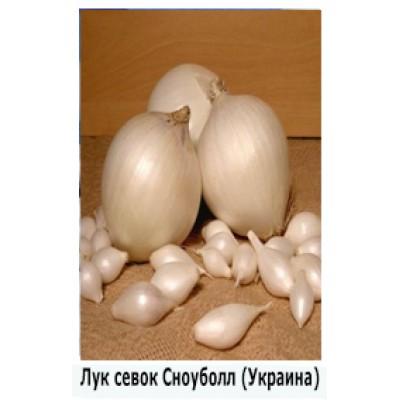 """Лук севок """"Сноуболл"""", Украина."""