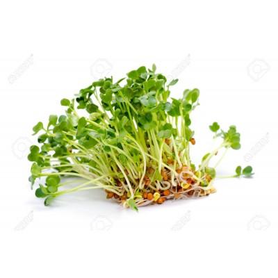 Семена Микрозелени  люцерна