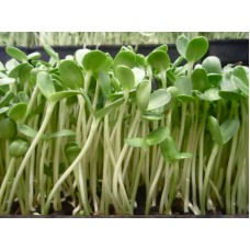 Семена Микрозелени подсолнух, 20г