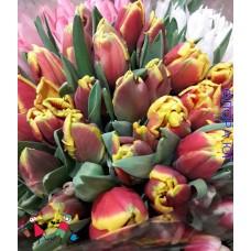 Тюльпан  Bright Parrot (Брайт Пэррот) (5шт)