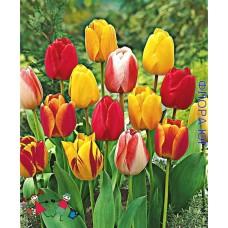 Детки тюльпанов