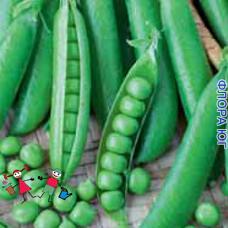 """Горох овощной """"Адагумский"""""""