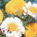 Хризантема смесь