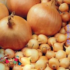 """Лук севок """"Альфа"""", Голландия. (0,5 кг)"""