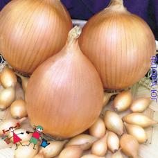 "Лук севок ""Голиат"", Голландия. (0,5 кг)"