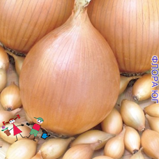 """Лук севок """"Стурон"""", Голландия (0,5 кг)"""