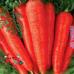 "Морковь ""Артек"""