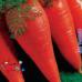 """Морковь """"Шантанэ"""""""