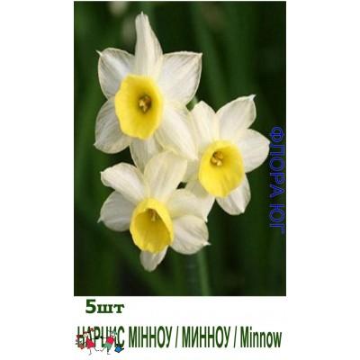 Нарцисс Minnow (Минноу).