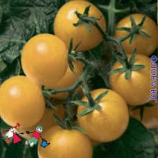 """Томат """"Черри желтый"""""""