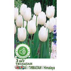 Тюльпан Гималаи (3шт)