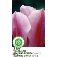 Тюльпан Холланд Бьюти (Holland Beauty), 5 шт. Украина.