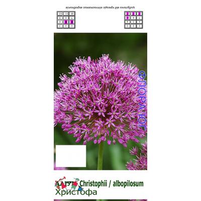 Лук декоративный Allium cristophii ( Аллиум Христофа )
