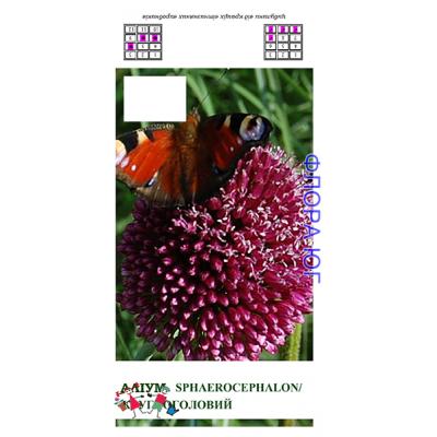 Allium Sphaerocephalon (Лук декоративный Круглоголовый)