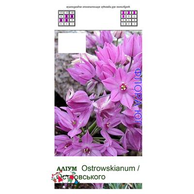 Лук декоративный Allium ostrowskianum ( Аллиум Островского )