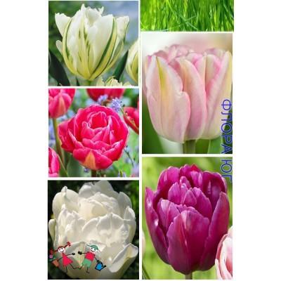 Клумба тюльпанов  Тенерифе