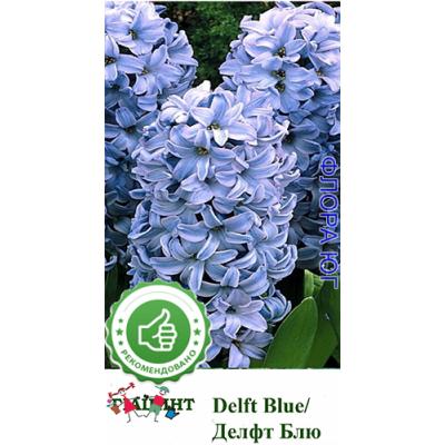 Гиацинт Delft Blue (Делфт Блю).