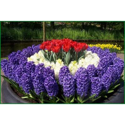Где купить луковицы цветов в Украине ?