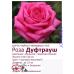 """Роза """"Дуфтрауш"""", (Duftrausch)"""
