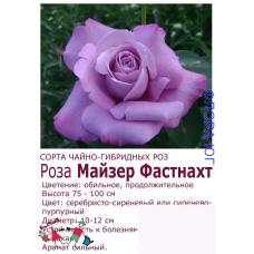 Роза Майзер Фастнахт