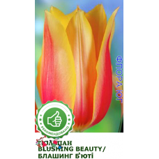 Тюльпан Blushing Beauty (Блашинг Бьюти)