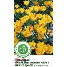 Тюльпан Bright Gem (Брайт Джем)