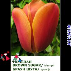 Тюльпан Brown Sugar (Браун Шуга)